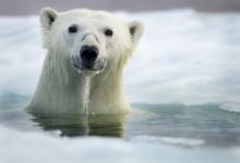 北极熊扫描器4.4企业版发布