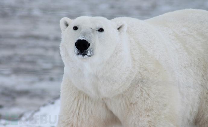 北极熊扫描器3.5