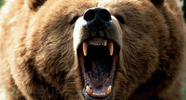 bear_attack.jpg