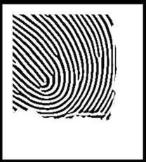使用Gabor滤波器处理后的指纹