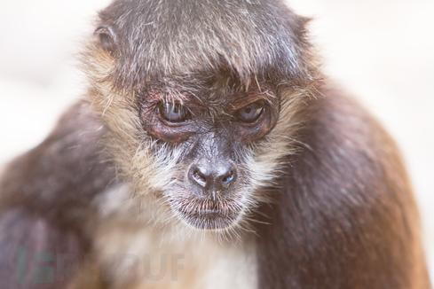 02-monkey.jpeg