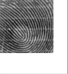 电容指纹传感器采集到的指纹图像