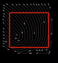 指纹图像的特征点提取结果