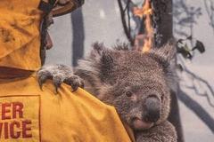 考拉在哭泣:信 用 卡盗窃黑客帝国对澳大利亚山火善款募捐网站的攻击分析