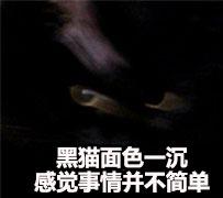 黑猫面色一沉,感觉事情并不简单 - 气得我都糊掉了_并不简单_不约_群聊表情